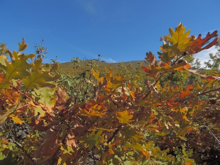 otoño Majaelrayo