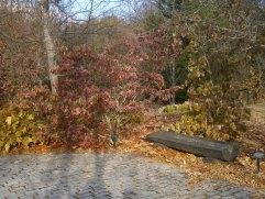 Otoño en el arboreto Giner de los Rios